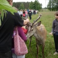w Kadzidłowie można spotkać różne zwierzątka...